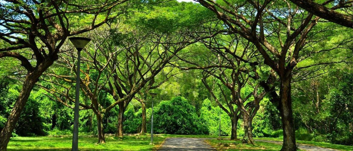 Top 10 Parks in Singapore